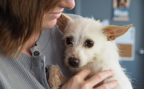 Penny, a dog rescued by PETA, being held by woman