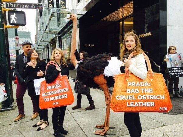 PETA demo at Prada Shareholder Meeting