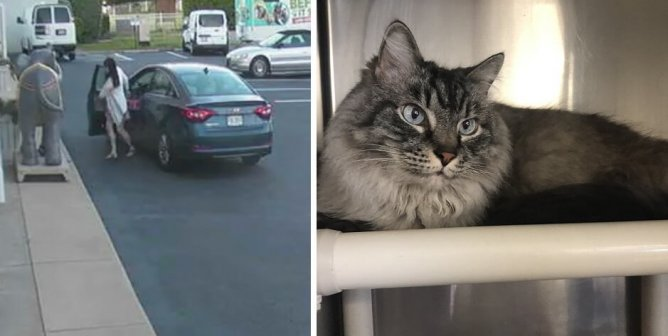 Help Identify This Woman Who Abandoned a Cat Outside PETA's HQ