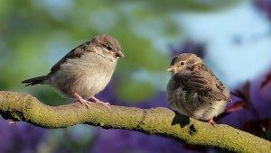 Living in Harmony With Wildlife