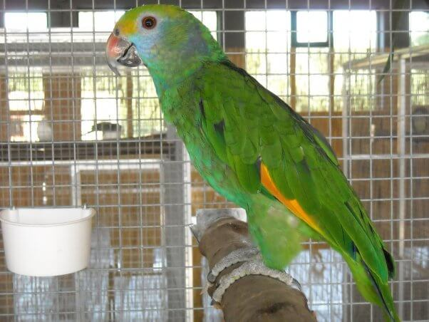 Green Bird in Cage