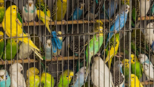 Birds Don't Belong in Cages, Period