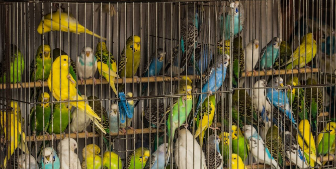 Bird PTSD and More Reasons Never to Cage Them | PETA