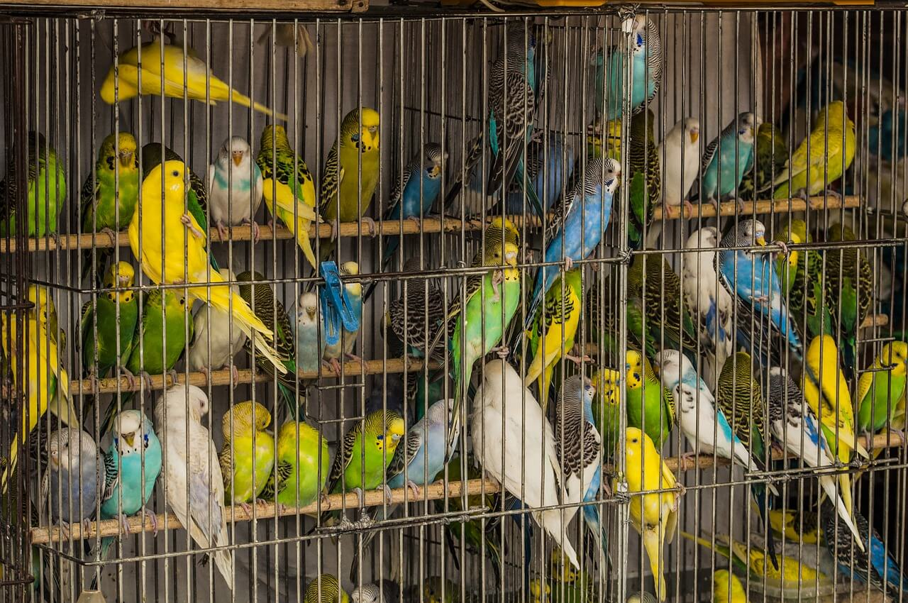 There Is No Such Thing as a 'Cage Bird' | PETA