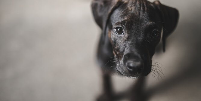Youth Cruelty to Animals—It's an Epidemic