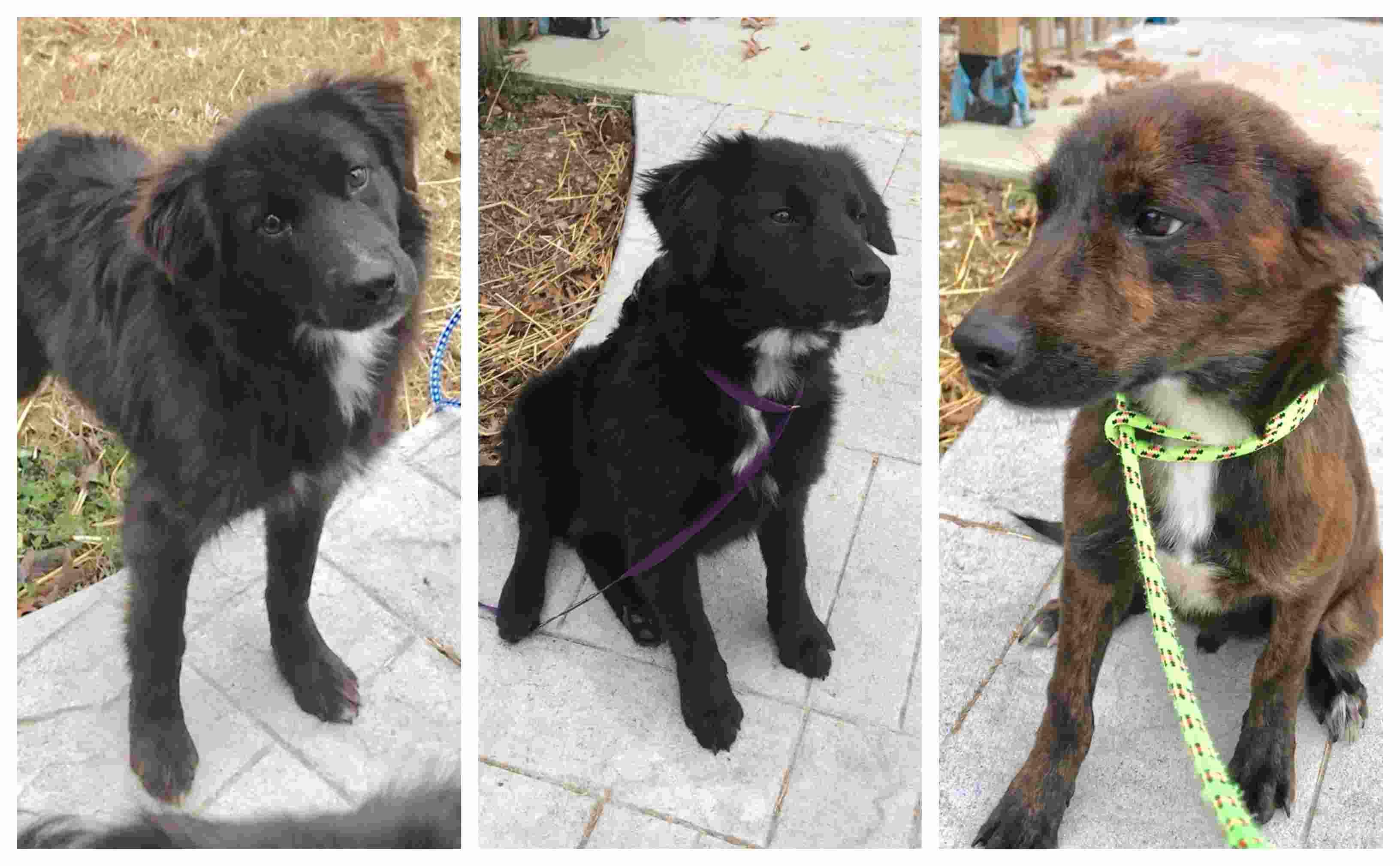 Rescued backyard dogs