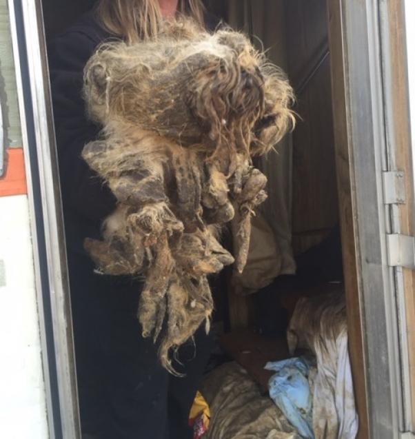 Police Photos From Raids on 'No-Kill Animal Rescues' | PETA