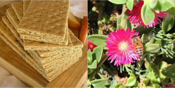 Help Save Bees With Buzz-Worthy Honey-Free Vegan Graham Crackers