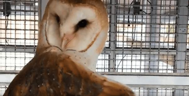 Johns Hopkins University owl torture