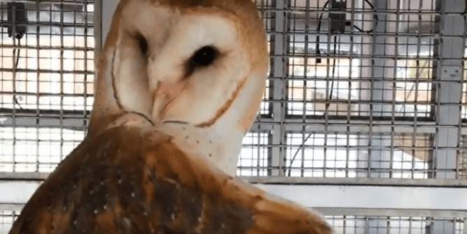 Johns Hopkins Defends Cruel Owl Experiments; PETA Debunks Its Lies