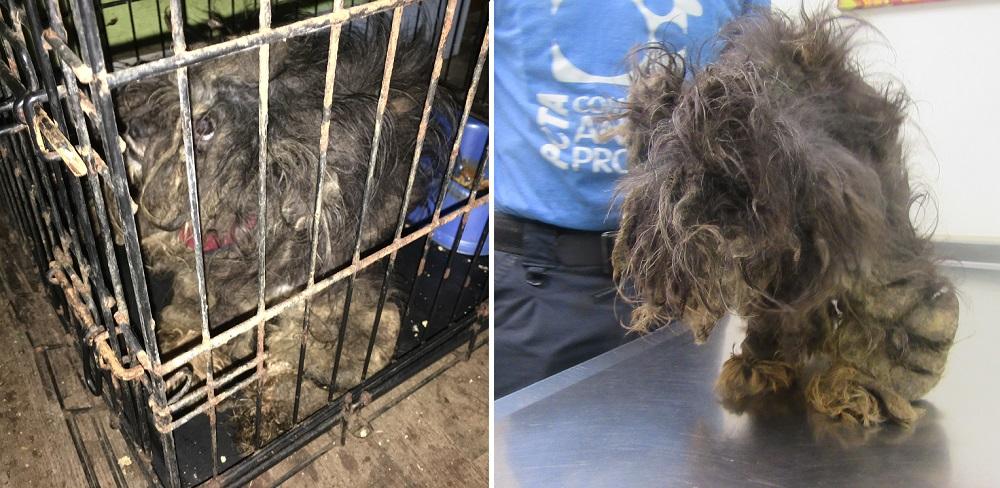 PETA Rescued Murphy Before Photos