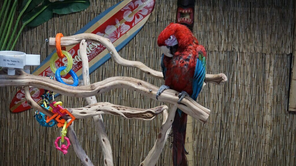Bird imprisoned at SeaQuest