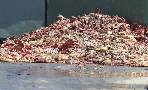 slaughterhouse remnants, animal bones, tendons, ligaments, gelatin
