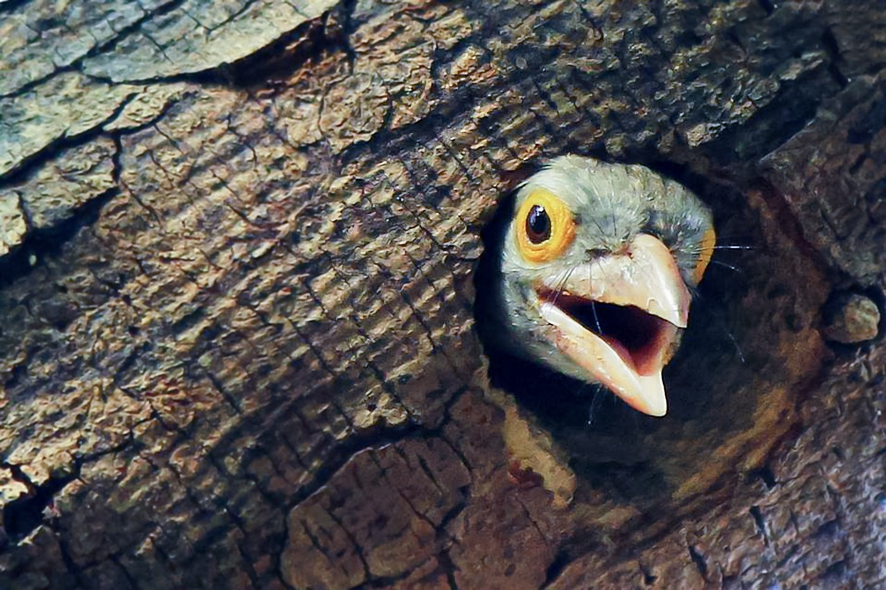 bird peeking out of tree