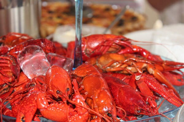4 reasons why you shouldn't eat crayfish  peta