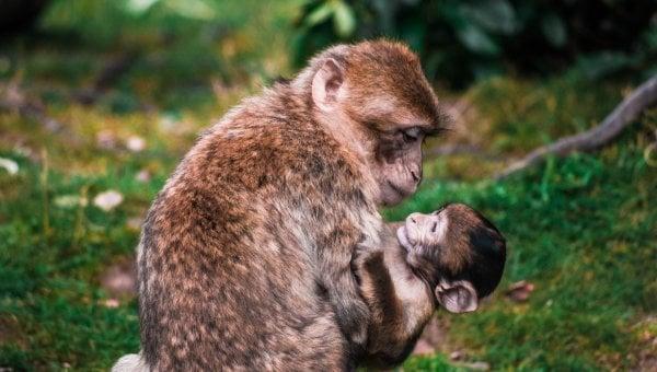 Primates in Laboratories