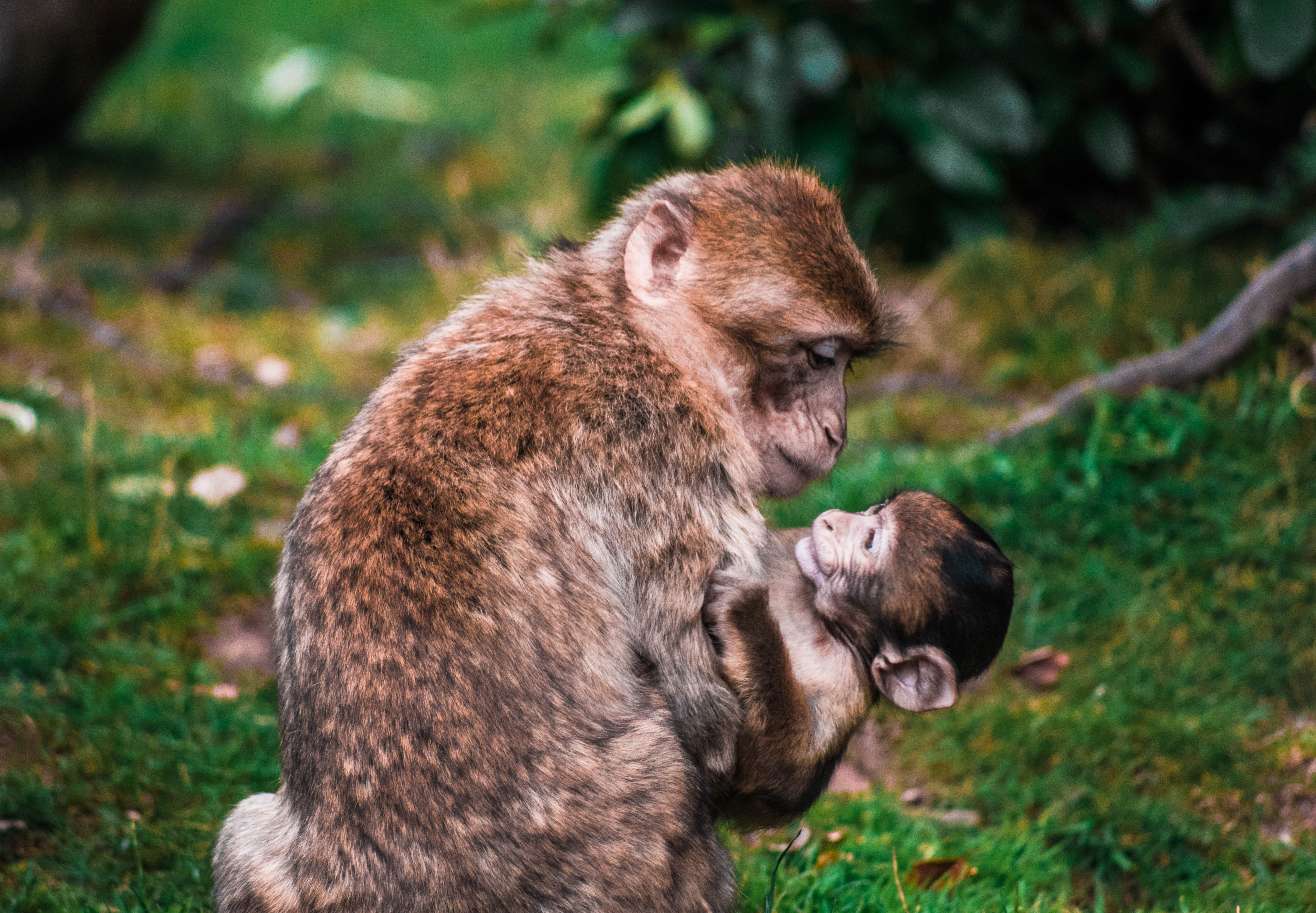 primate mother with baby