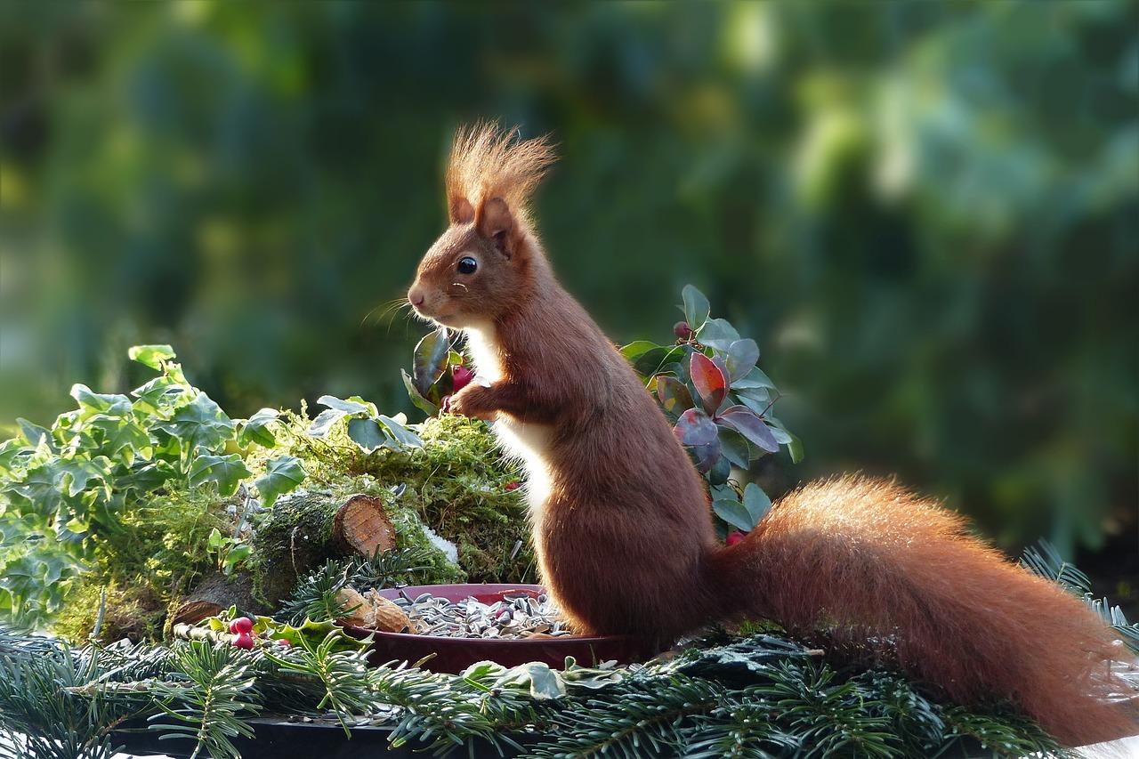squirrel, wild, happy, eating