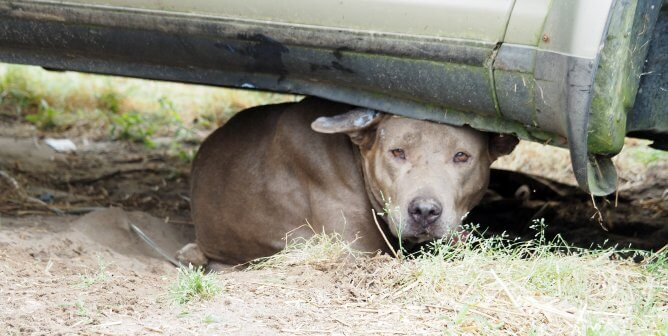 Observe International Homeless Animals' Day by Taking Action With PETA