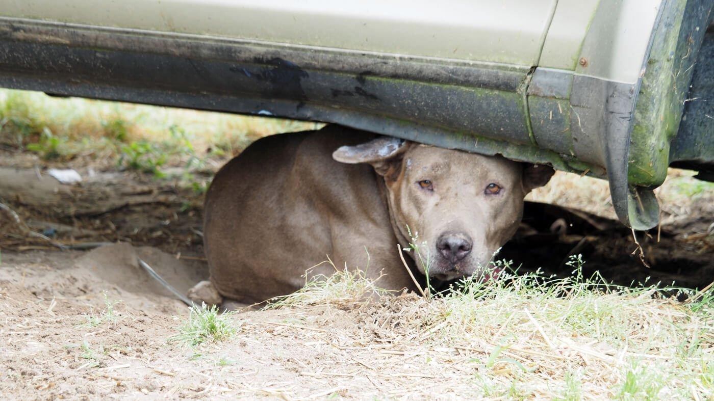 Stray Dog in Murfreesboro North Carolina