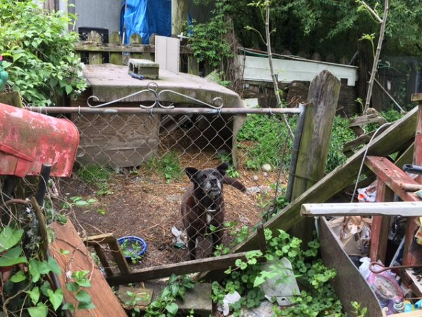 Black dog in small outdoor enclosure surrounded by trash
