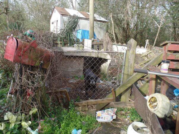 Black dog in backyard enclosure littered with trash