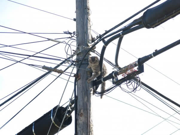 Cat on utilty pole and power lines