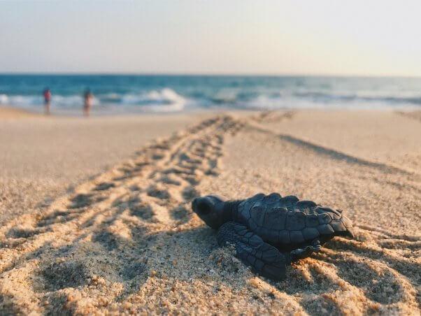 baby turtle on sand