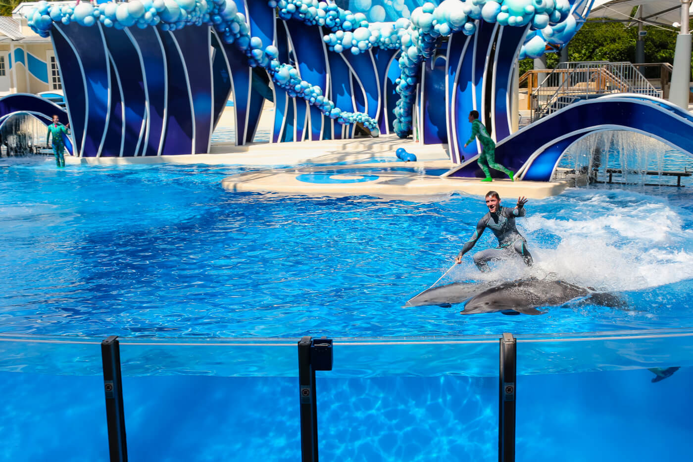 2020: SeaWorld Stops Making Trainers Stand on Dolphins' Faces