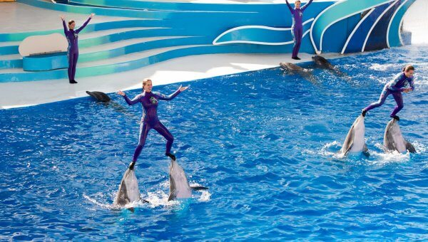 Urge Smart Destinations to Cut Ties With SeaWorld!