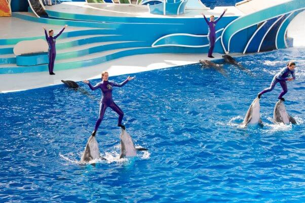 four people performing with 7 dolphins at a show in seaworld