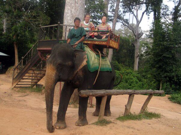 Progress! Cambodia's Angkor Wat to Nix Elephant Rides by 2020