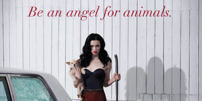 Krysten Ritter: Do Whatever It Takes, Be An Angel For Animals
