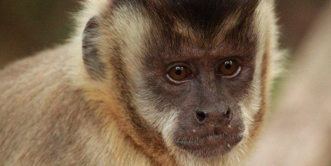 Hollywood Animal Trainer Settles Baseless Lawsuit Against PETA, Pays Up!