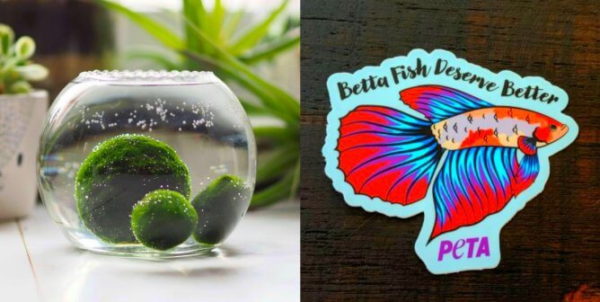 This Aquatic Plant Is Your New Favorite Cruelty-Free Companion