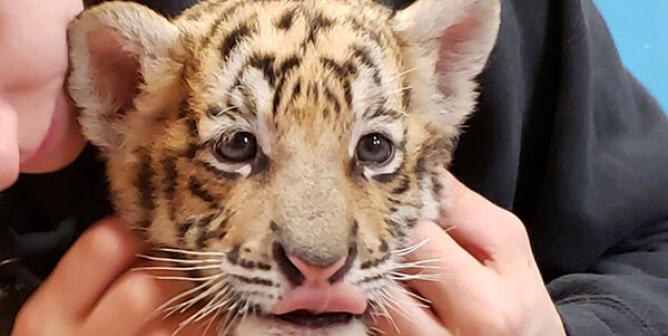 Zoos: Pitiful Prisons | PETA