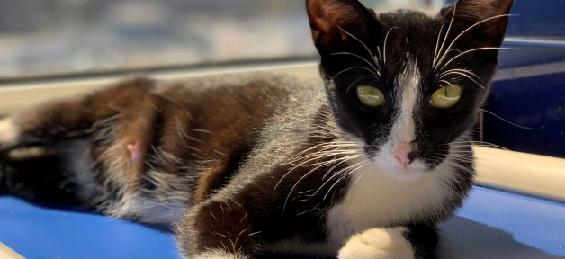 Rescued cat Fiji relaxing in front of window