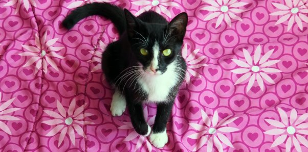 Pretty black and white cat on a pink flowered blanket