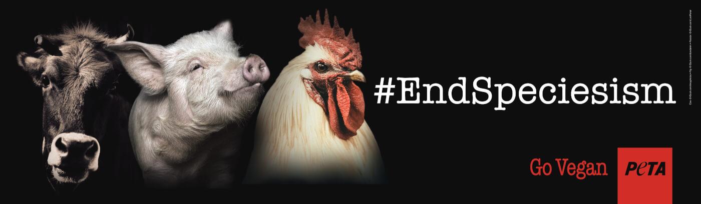 Go Vegan End Speciesism