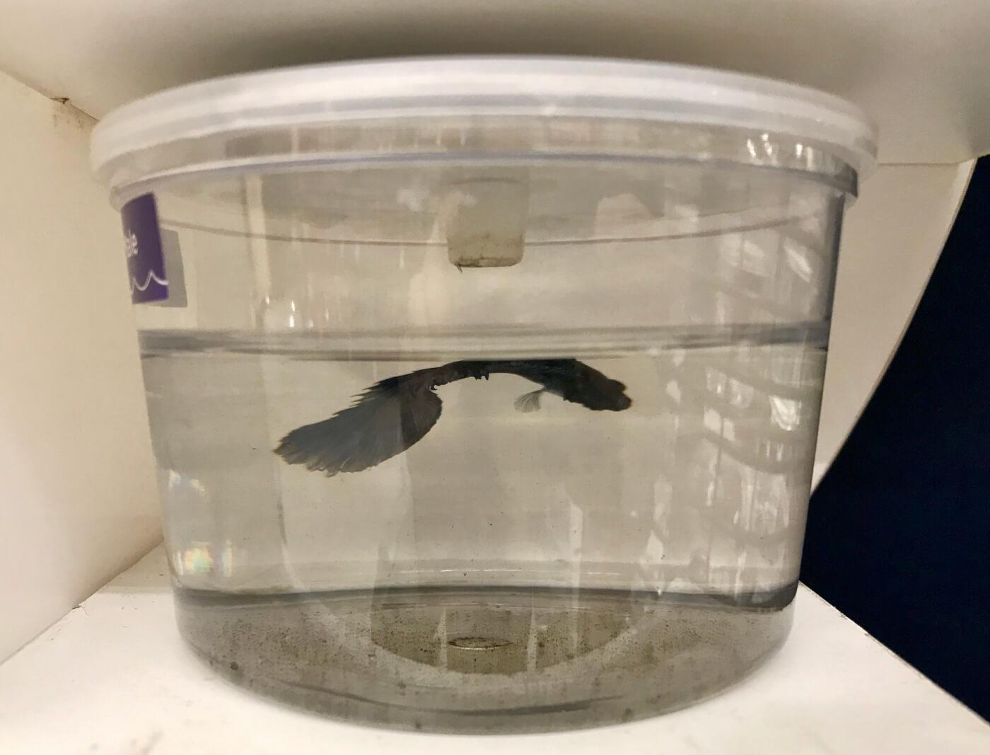 Greed Is Killing Betta Fish At Petco Peta