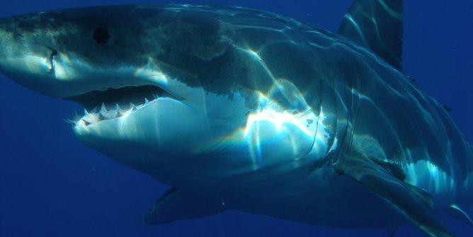 Why Every Week Is Shark Week