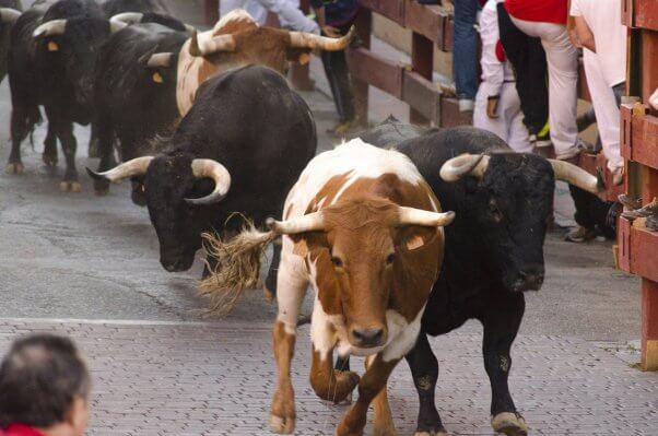 running of the bulls, rotb, bullfights, bullfighting, bull run