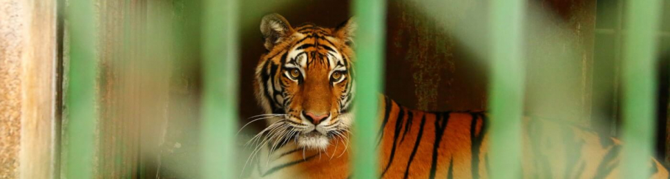 take action to help animals in roadside zoos