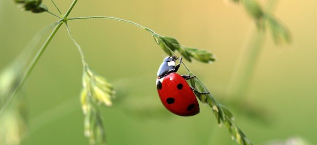 take rapid action to help bugs