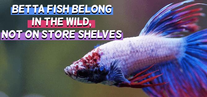 Empathy-Building Literacy Centers: Betta Fish Belong in the Wild