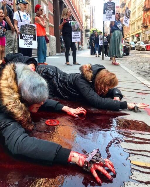 canada goose protest, fur, down, peta-owned