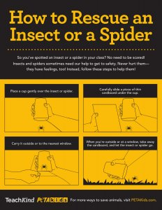 TK Insect Rescue Poster