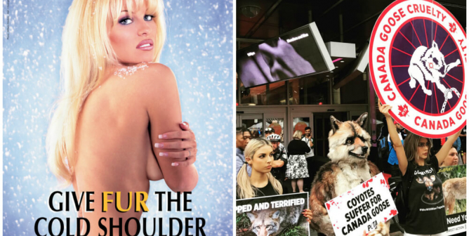 PETA, Pamela Anderson Want Canada Goose Money out of Toronto Film Fest