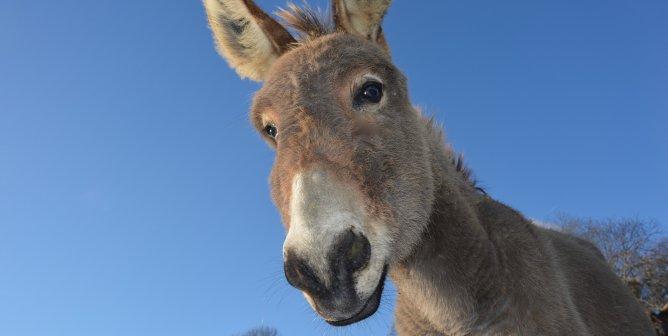 Victory! Kenya Bans Donkey Slaughter for Ejiao After Big Push From PETA