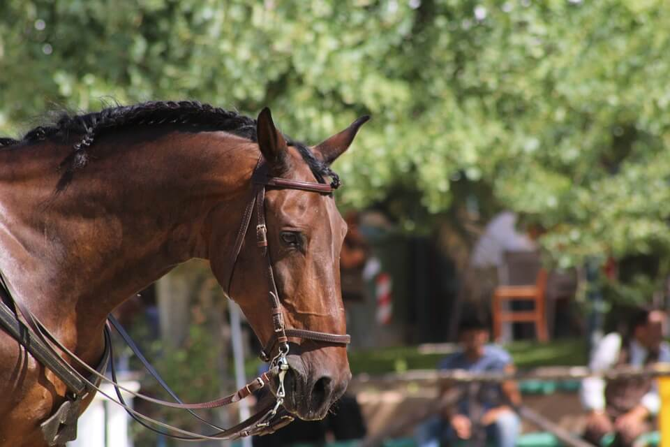 horse riding, bridle